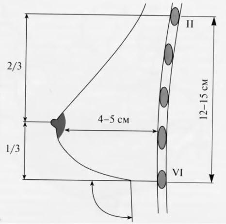 Топография молочных желез