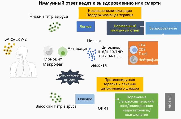 Титр вируса и иммунный ответ - важные компоненты прогноза течения COVID-19