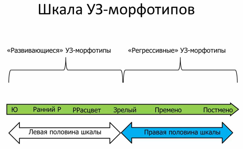 Шкала УЗ-морфотипов