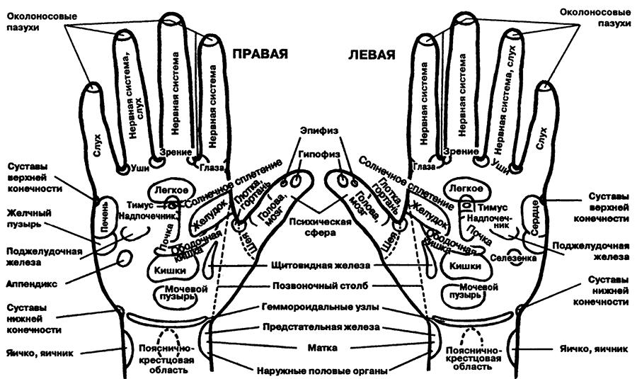 Рис. 28. Зоны проекции органов на кисти рук