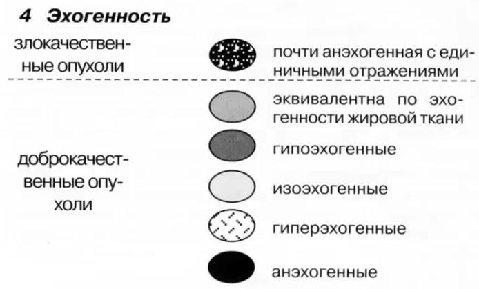 Ультразвуковые критерии опухолей молочной железы. 4 Эхогенность