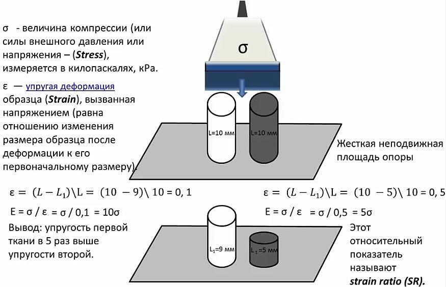 Физические основы компрессионной эластографии