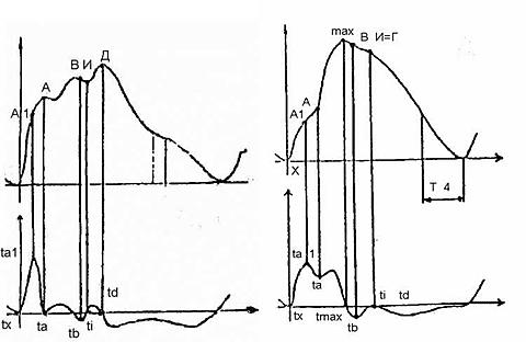 Левая почка. Протокол ультразвукового исследования почек.
